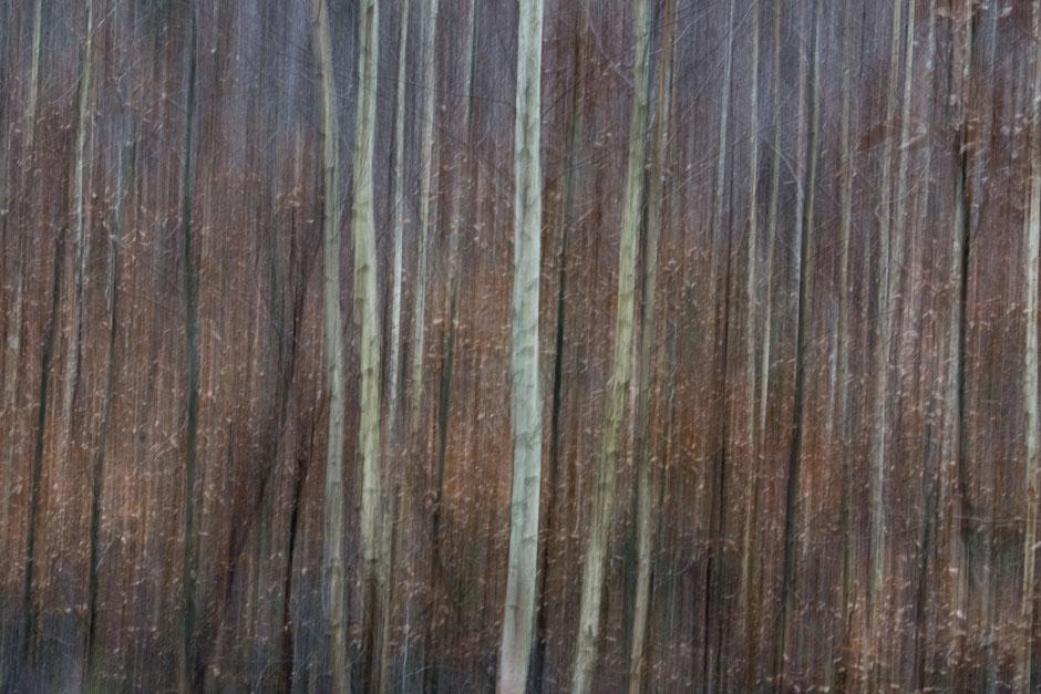 Birkenwald im Winter. Die Natur wartet auf eine neue Chance.