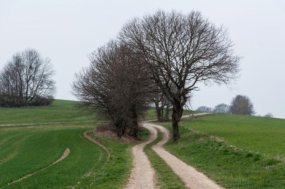 Eine schöne Wanderung. Eine beruhigende Aussicht. Eine ausgeglichene Komposition. Zur Ruhe kommen. Natur genießen. Das tut gut in unserer Zeit!