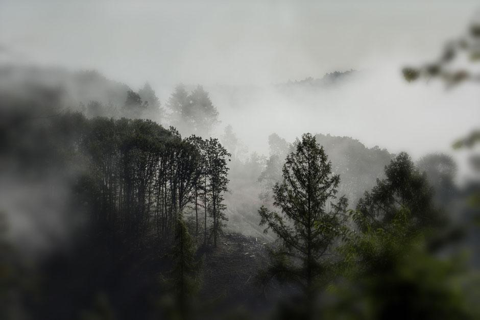 Dann kommt der Herbst mit Nebel. Jetzt ist es soweit. Beim ersten Mal noch überraschend, inzwischen schon wieder ein gewohntes Bild. Hier nicht sehr bunt.