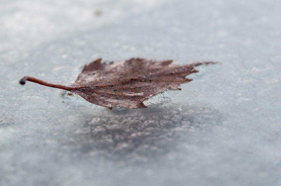Nanu, was ist das? Das Blatt schwebt über der Eisfläche? Wirken da übernatürliche Kräfte? Wohl eher nicht. Aber: was ist da los?