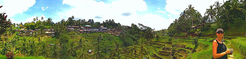 Weltreise, Travel, Backpacker, Bali, Asien, Ubud, Reisterrassen, Palmen, Urlaub, Langzeitreise