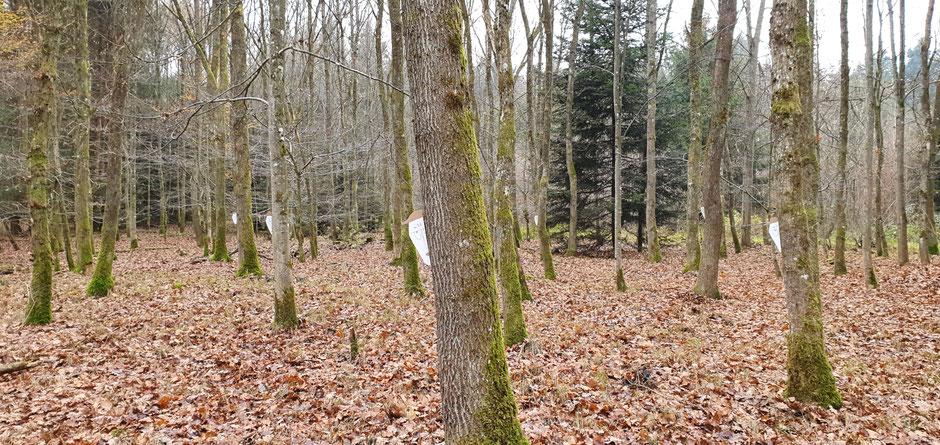 Fremde Männer hinter Bäumen im Wald