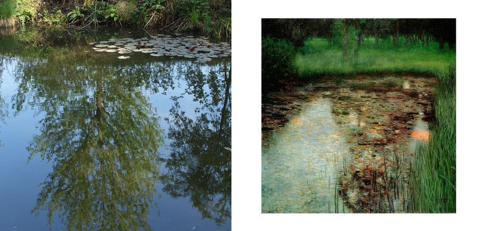 Natur- Spiegelung von einem Baum im See