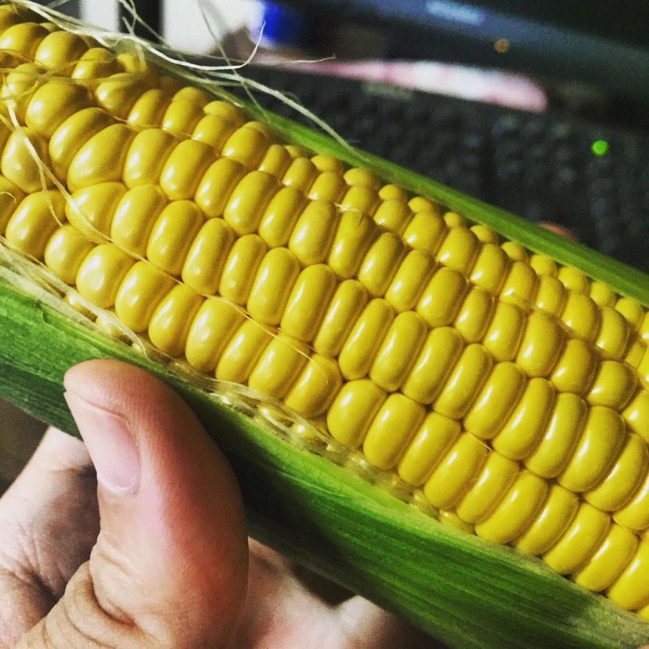 Sweet Corn from Tokyo Akiruno summer fresh local vegetable Akigawa Farmers Center shopping spot TAMA Tourism Promotion - Visit Tama とうもろこし 東京都あきる野産 夏野菜 新鮮 地場産 秋川ファーマーズセンター 買い物 スポット 多摩観光振興会