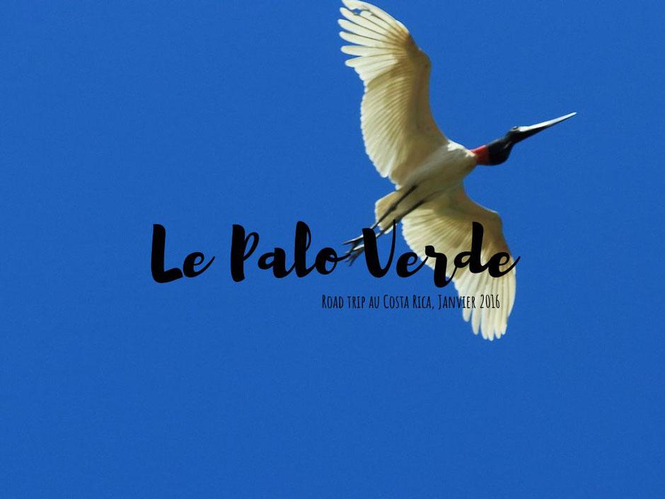 Palo verde,COSTA RICA. missaventure blog