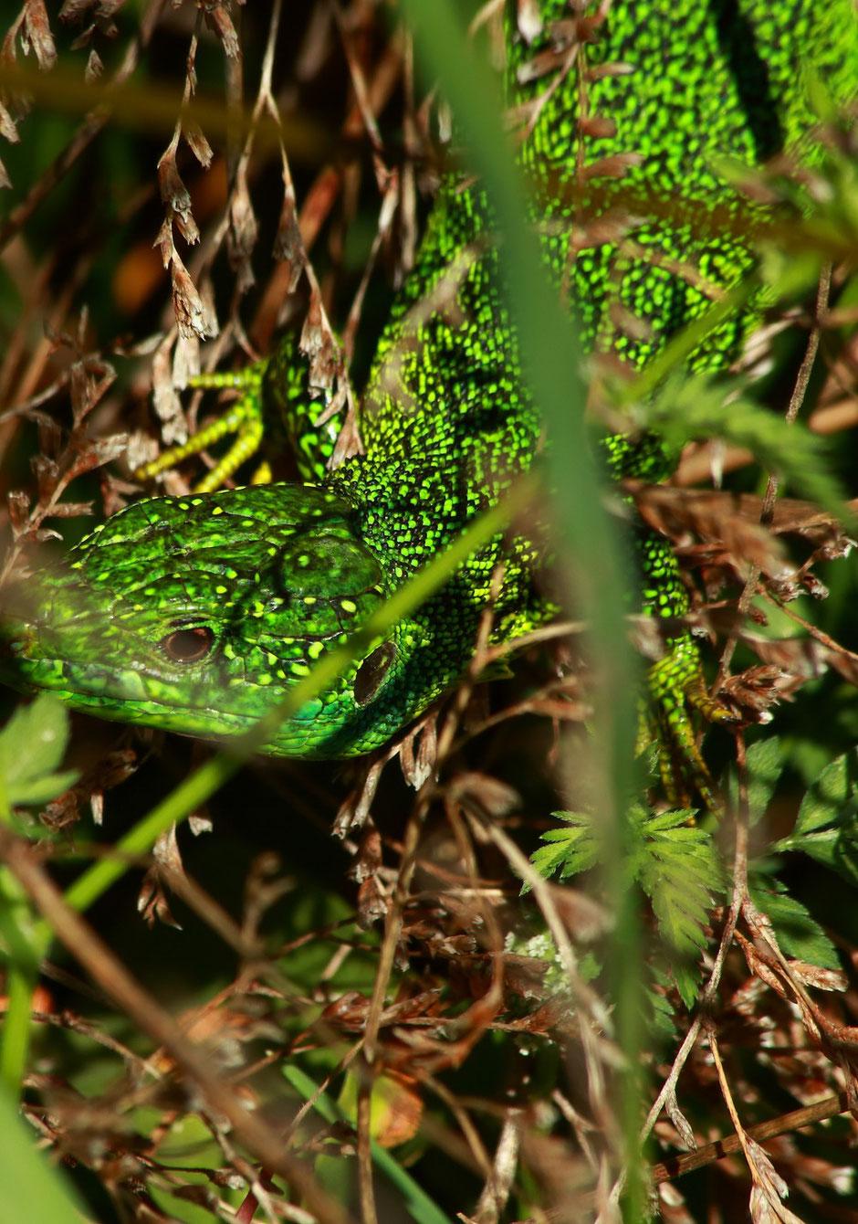 CAMARGUE. reserve du Scamandre. week end nature en Camargue. www.missaventure.com blog d'aventures, nature et photos.