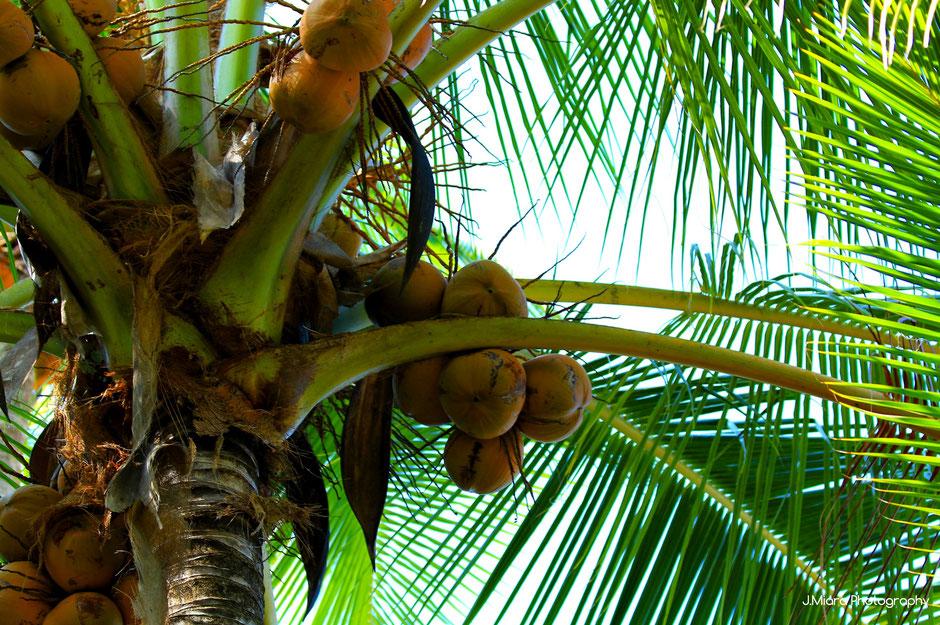 Manuel Antonio, COSTA RICA. missaventure blog