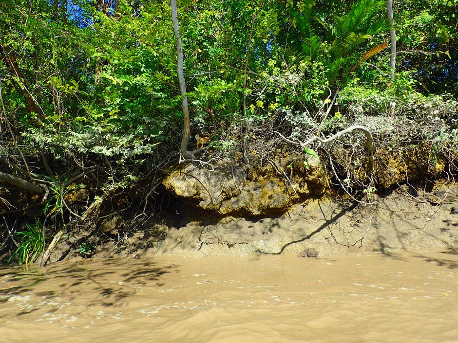 Cherchez l'iguane!