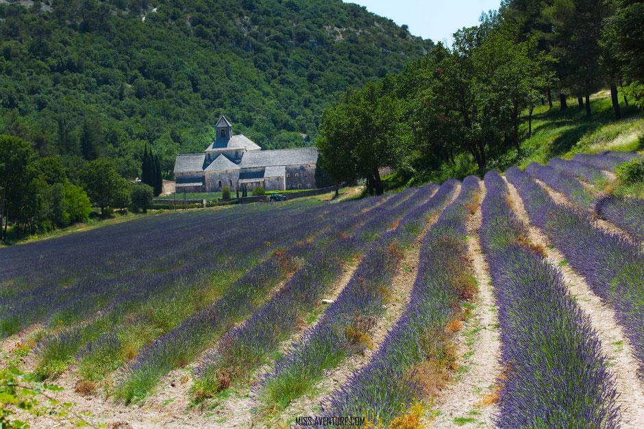 abbaye de Senanque, VAUCLUSE. www.missaventure.com. blog aventure, nature et photos