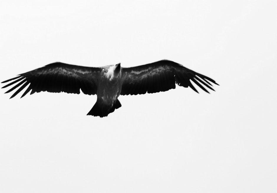Week end nature et sport dans le VERDON (FRANCE) www.missaventure.com blog d'aventures nature et photos, les vautours du Verdon