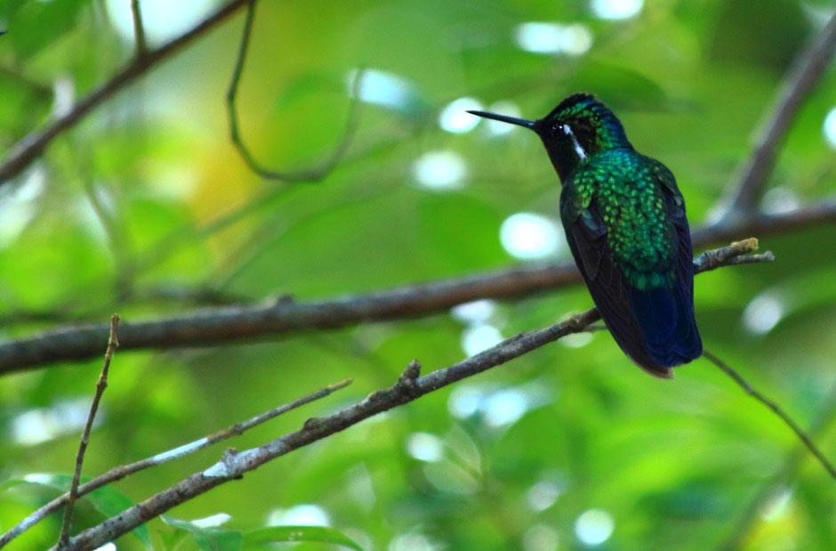 Monteverde coté nature. le café colibri, road trip au COSTA RICA. www.missaventure.com blog voyage d'aventures, nature et photos