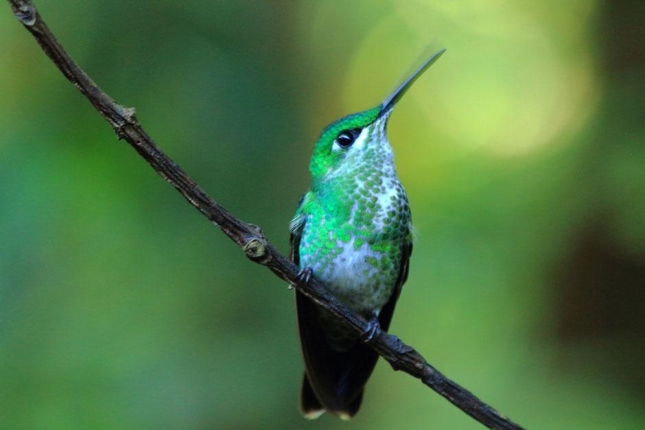 Monteverde coté nature. le café colibri road trip au COSTA RICA. www.missaventure.com blog voyage d'aventures, nature et photos