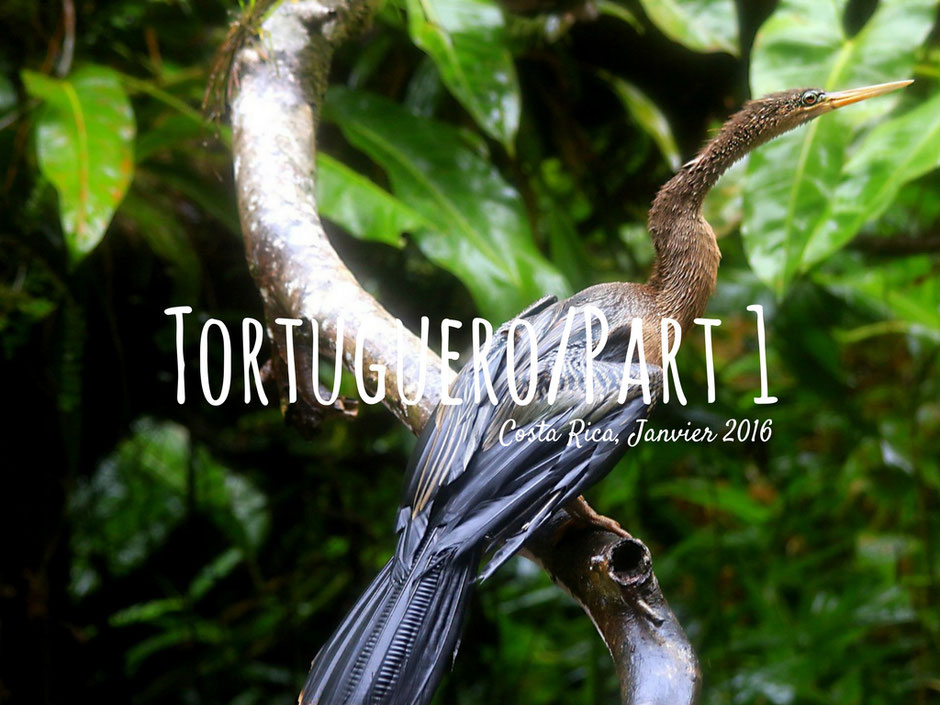 Tortuguero, Road trip de 3 semaines au COSTA RICA. www.missaventure.com. blog voyage d'aventures, nature et photos