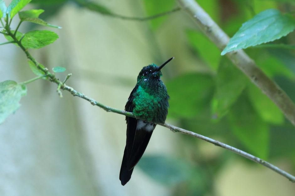 Monteverde coté nature,le café colibri .road trip au COSTA RICA. www.missaventure.com blog voyage d'aventures, nature et photos