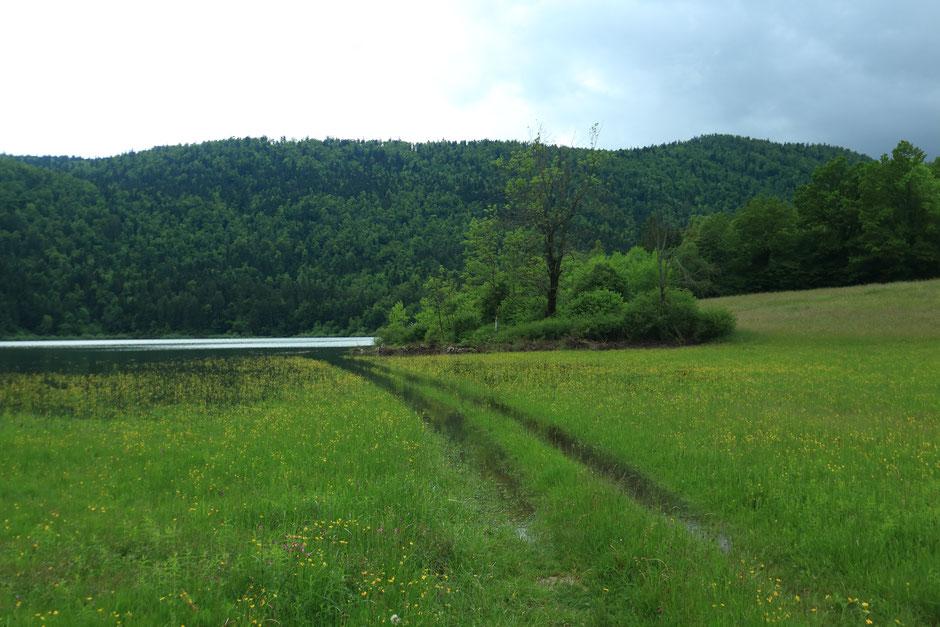 Hors des sentiers battus en Slovénie, Le lac de Cerknica. www.missaventure.com blog voyage d'aventures, nature et photos. Road trip en Slovenie