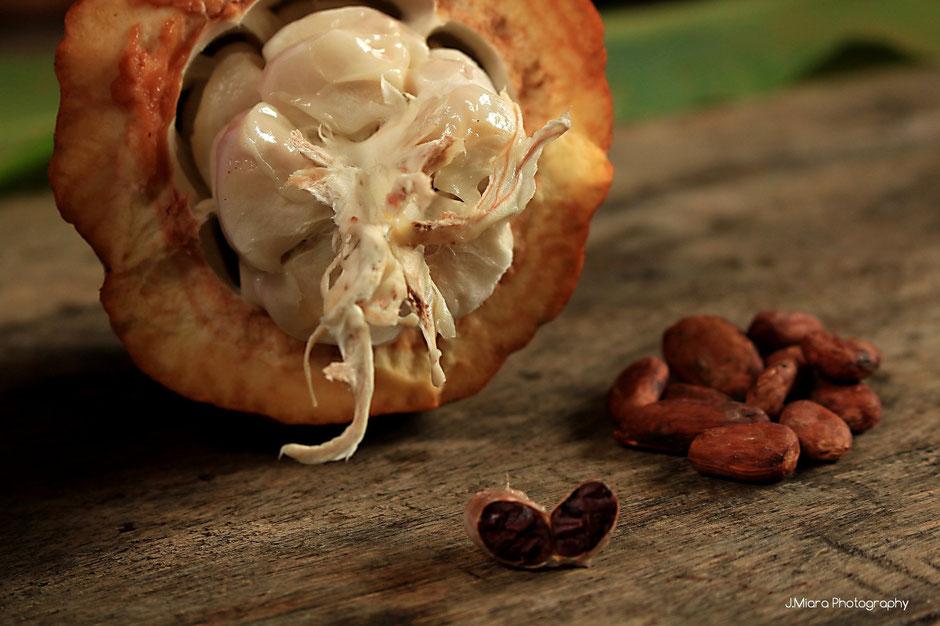 Cabosse et feves de cacao, culture Bribri, COSTA RICA. missaventure blog