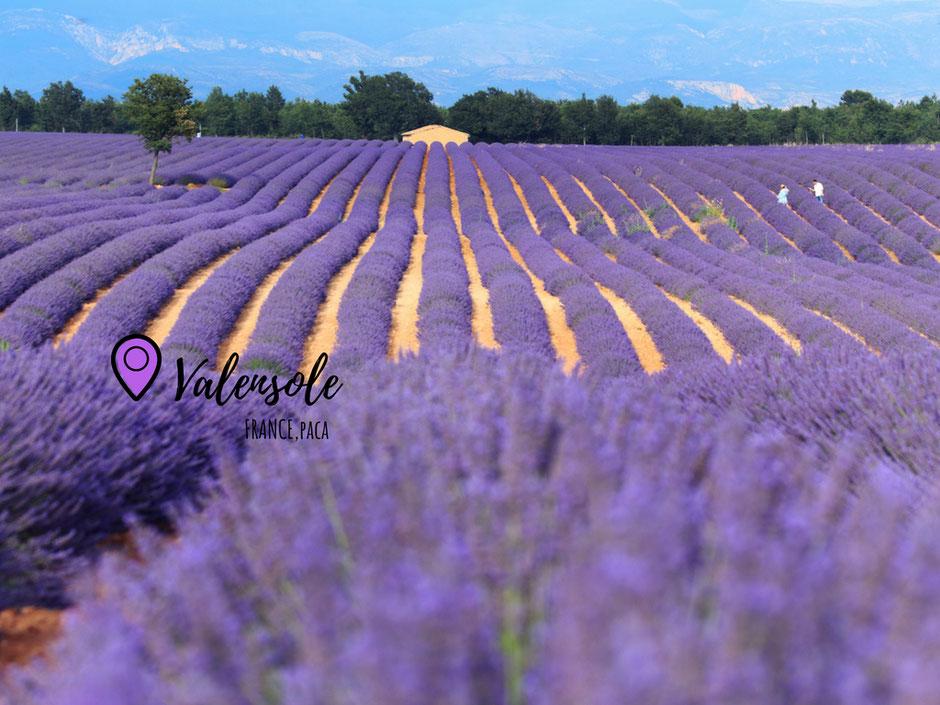 sur la route de lavande, Valensole PROVENCE, www.missaventure.com. blog voyage d'aventures nature et photos