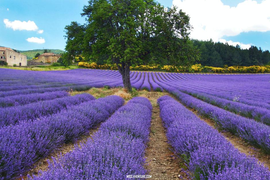 sur la route de la lavande. PROVENCE, Sault (France) www.missaventure.com blog voyage d'aventures, nature et photos
