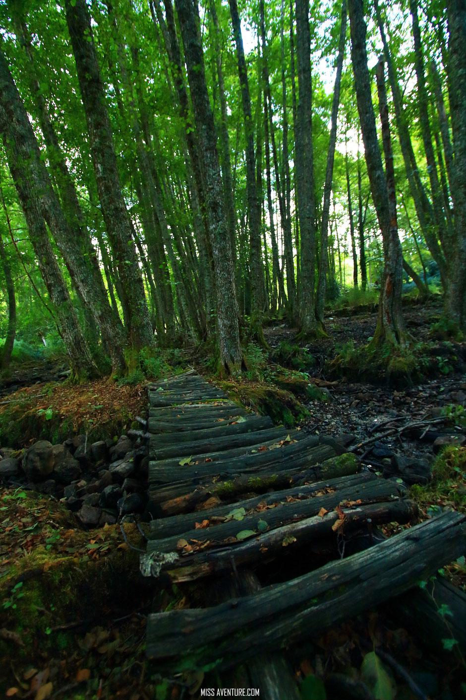 Foret d'Aitone, CORSE. www.missaventure.com blog voyage d'aventures, nature et photos. Road Trip Corse du Nord au Sud