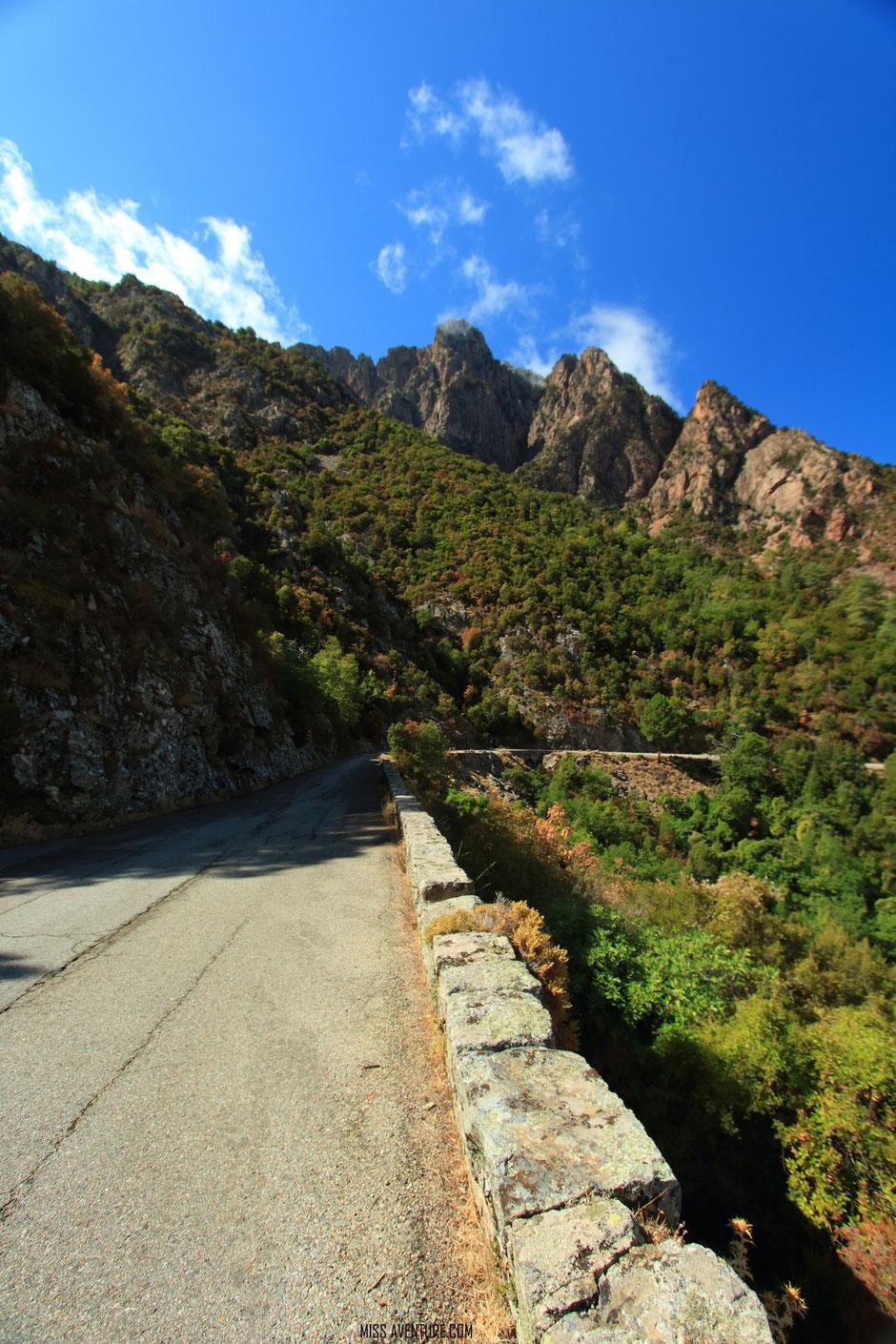 la foret d'aitone, CORSE. www.missaventure.com. blog voyage d'aventures nature et photo. Road Trip Corse du Nord au Sud