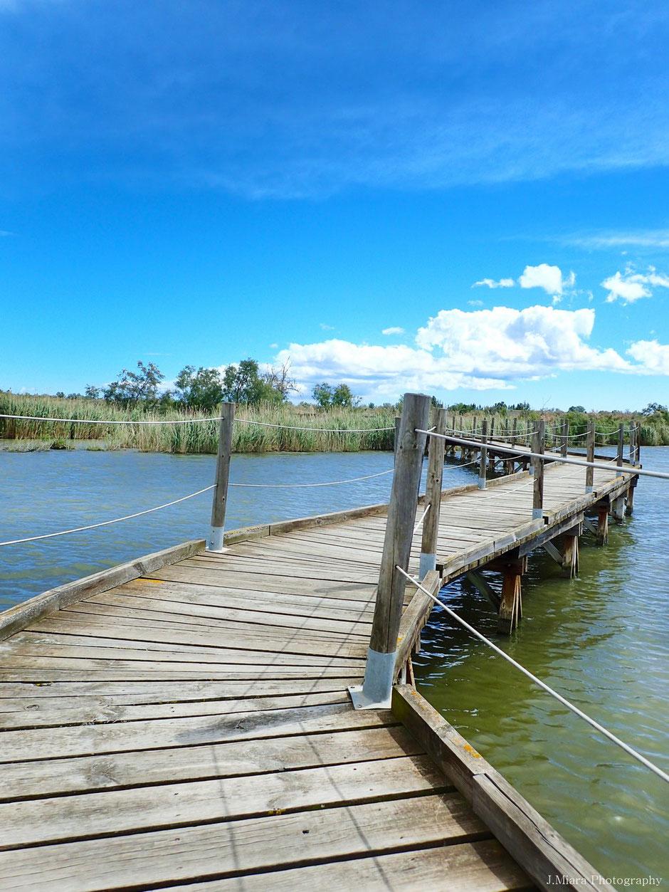 week end nature en Camargue. www.missaventure.com blog d'aventures, nature et photos. sentier du Butor, réserve du Scamandre