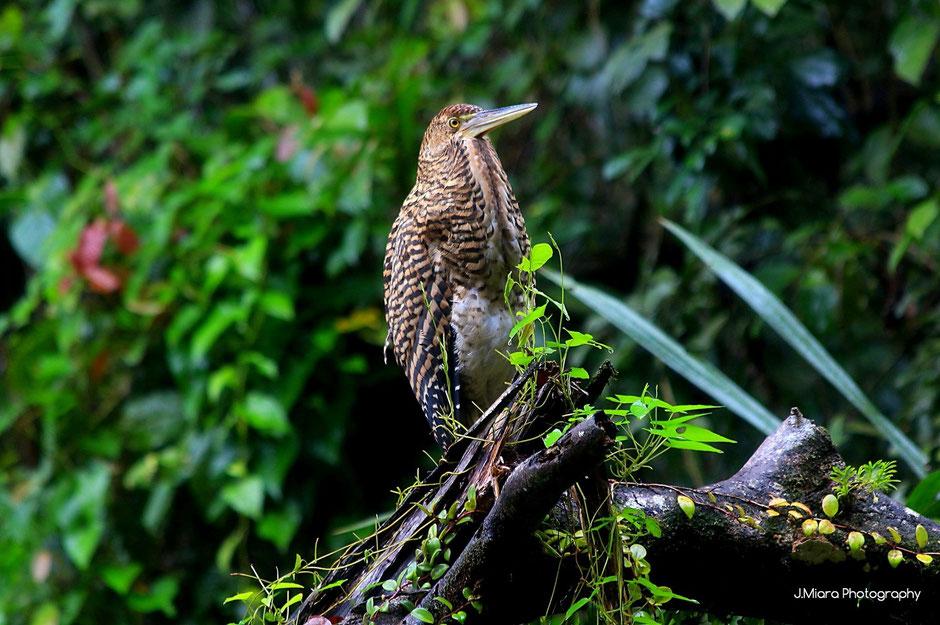Ballade canoë, Tortuguero adventure, COSTA RICA. missaventure blog