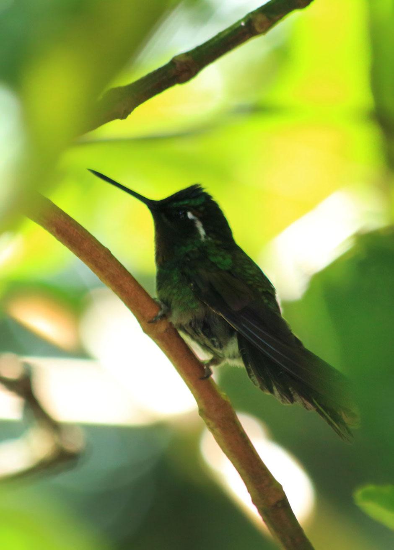 Monteverde coté nature, le café colibri .road trip au COSTA RICA. www.missaventure.com blog voyage d'aventures, nature et photos