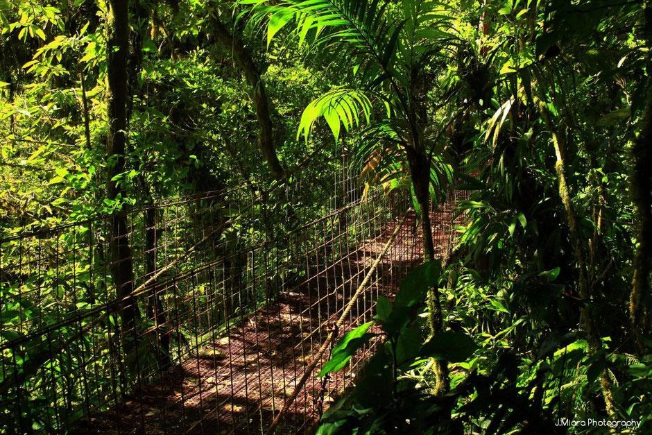 Reserve Santa Elena. Costa Rica. missaventure blog
