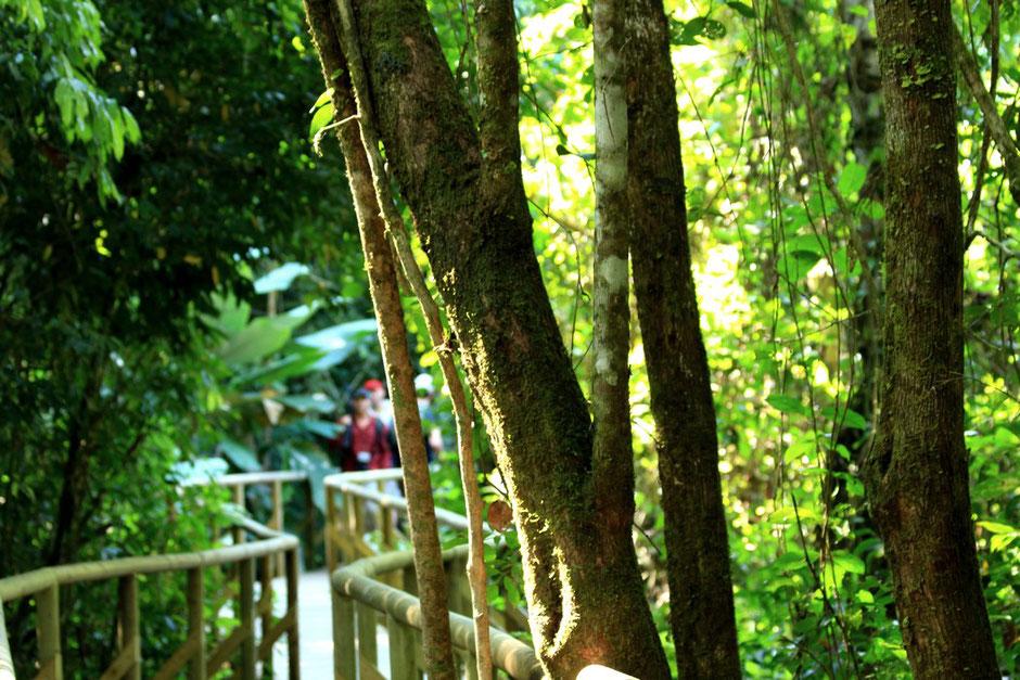 Parc national de Manuel Antonio. Road trip au Costa Rica. www.missaventure.com blog voyage d'aventures, nature et photos