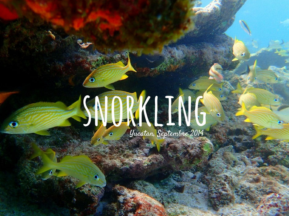 Snorkling Yucatán. MEXIQUE. missaventure blog