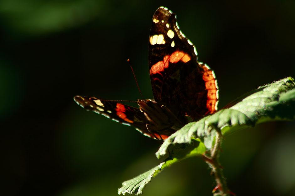10 conseils pour debuter en photographie animaliere. missaventure, blog aventures nature et photos