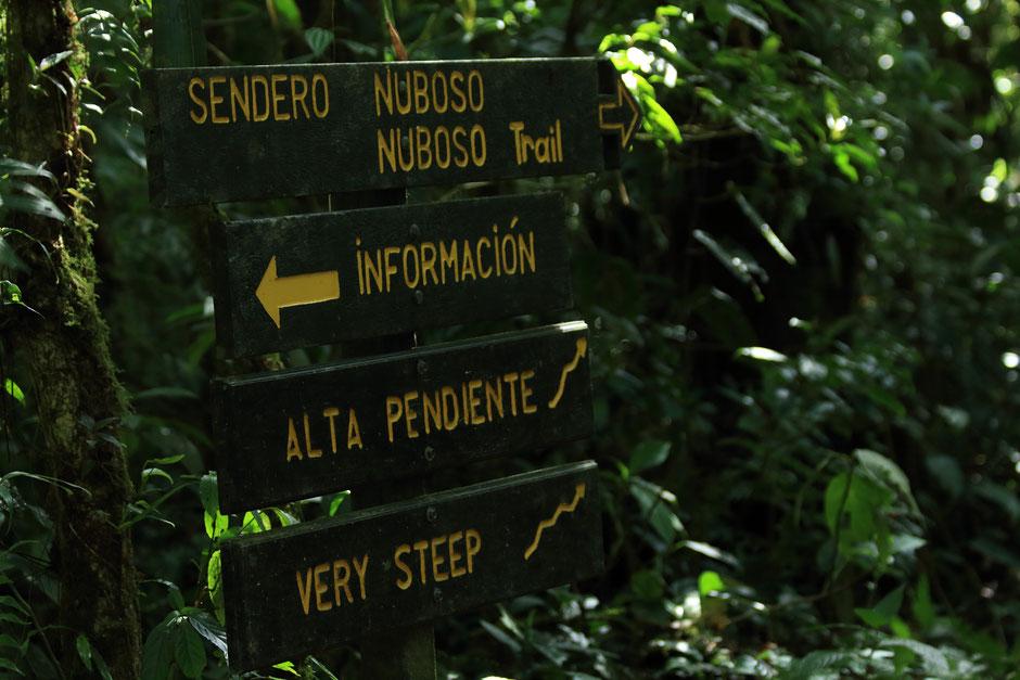 Sentier reserve Santa Elena, Monteverde.COSTA RICA. missaventure blog