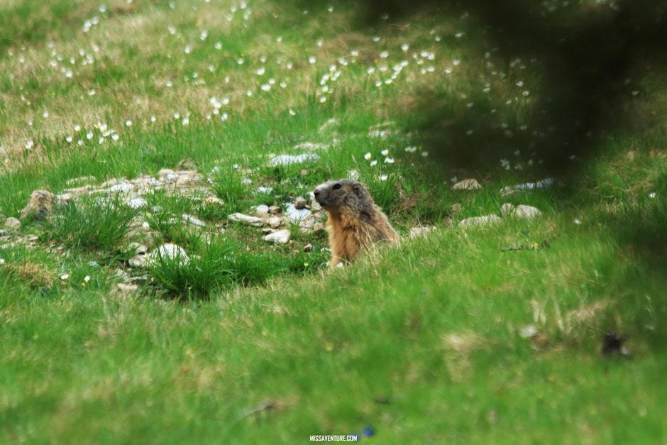 Randonnée et bivouac dans le Mercantour, allos. www.missaventure.com blog voyage d'aventures, nature et photos.