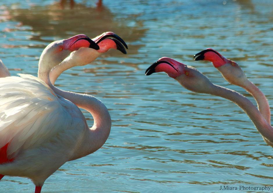 10 conseils pour debuter la photo animaliére. www.missaventure.com missaventure blog aventures, nature et photo