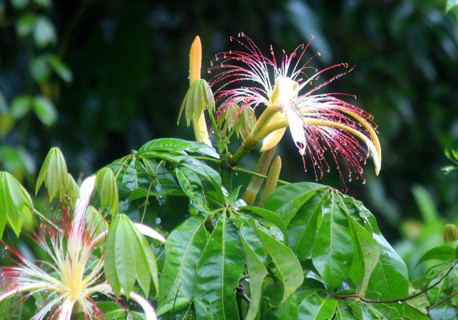 Flore de Tortuguero.COSTA RICA. missaventure blog