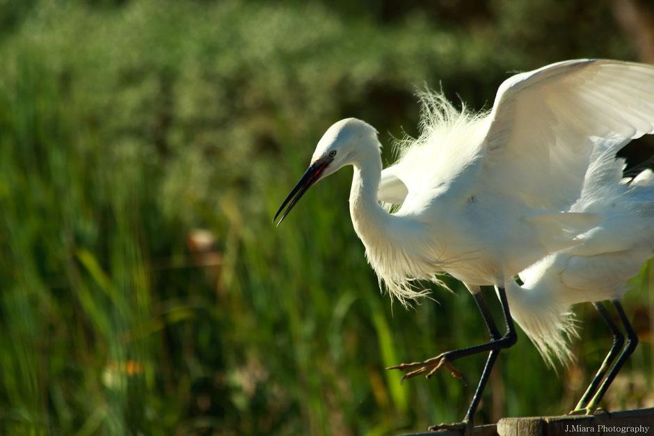10 conseils pour debuter la photo animaliére. www.missaventure.com blog aventures, nature et photo