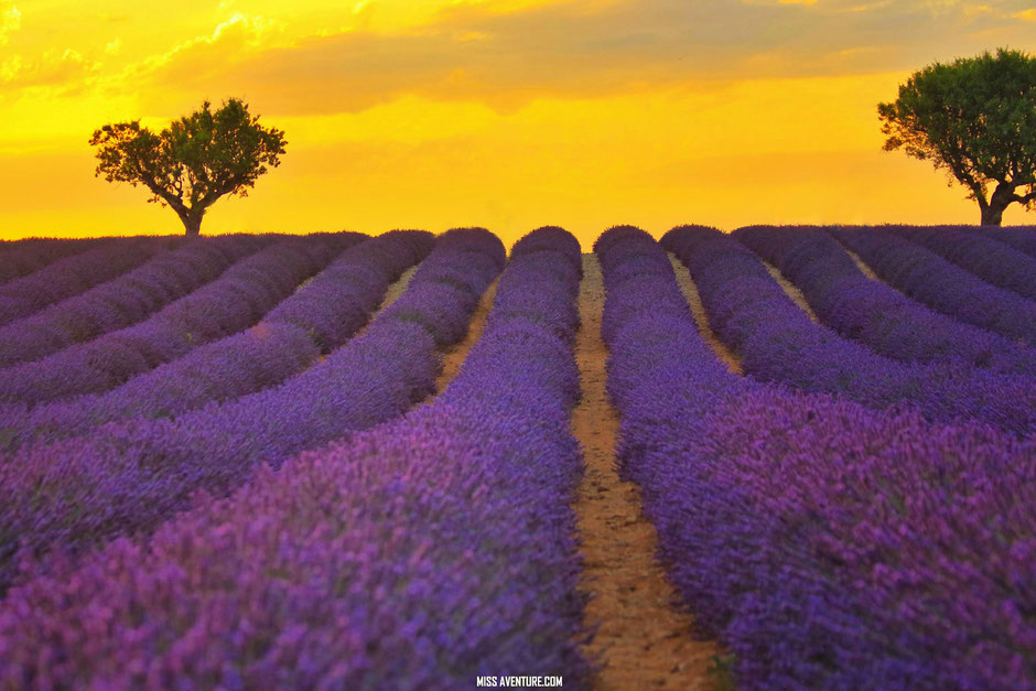 sur la route de lavande, Valensole coucher de soleil, www.missaventure.com. blog voyage d'aventures nature et photos