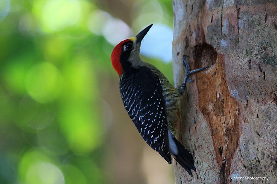 10 conseils pour debuter la photographie animaliere. missaventure blog aventures nature et photo