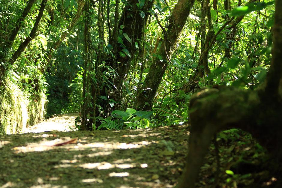 Monteverde coté nature. reserve Santa Elena. road trip au COSTA RICA. www.missaventure.com blog voyage d'aventures, nature et photos