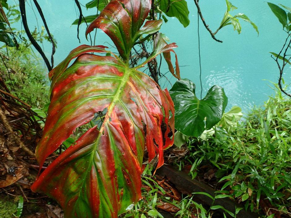 Lagune Rio Celeste, COSTA RICA. missaventure blog