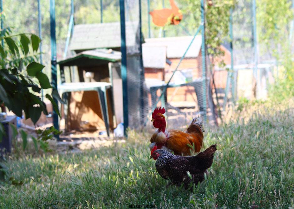 sur la route de la lavande. PROVENCE, Gite la fontaine. www.missaventure.com blog voyage d'aventures, nature et photos