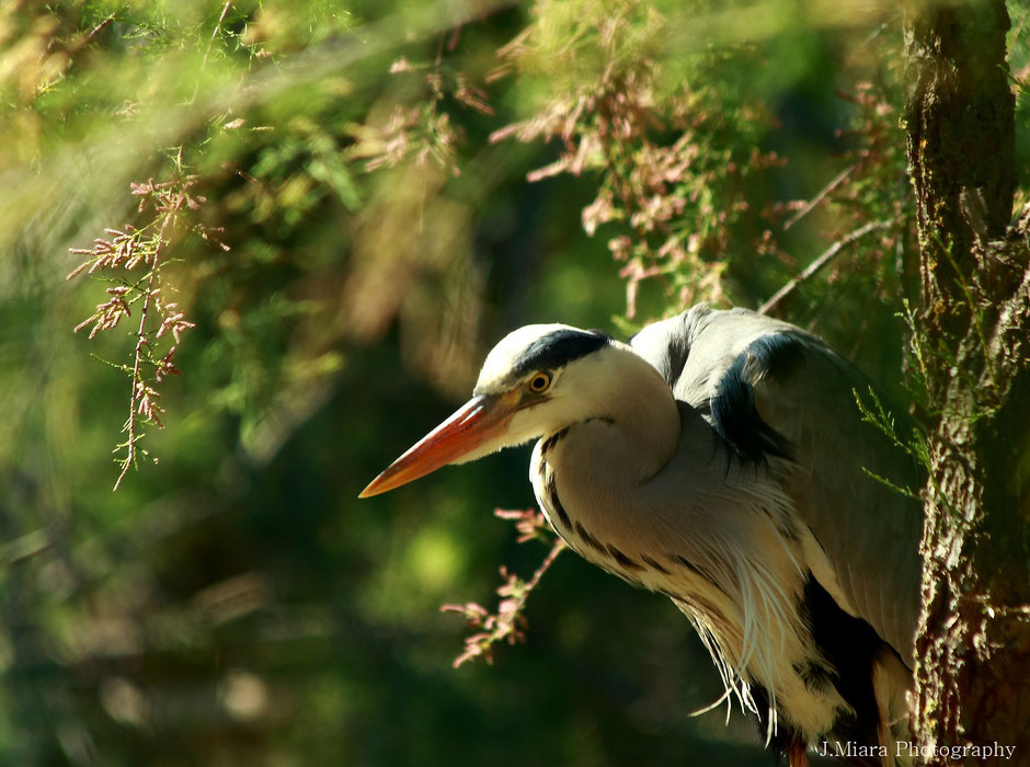 10 conseils pour debuter la photo animaliere. missaventure blog, aventures nature et photos
