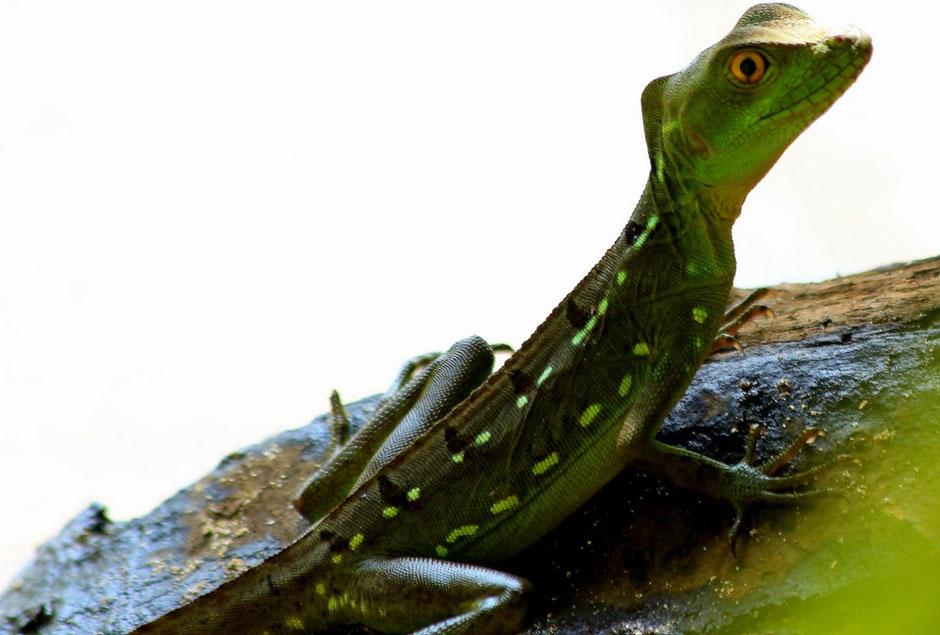 Cahuita, Road trip de 3 semaines au COSTA RICA. www.missaventure.com blog voyage d'aventures, nature et photos
