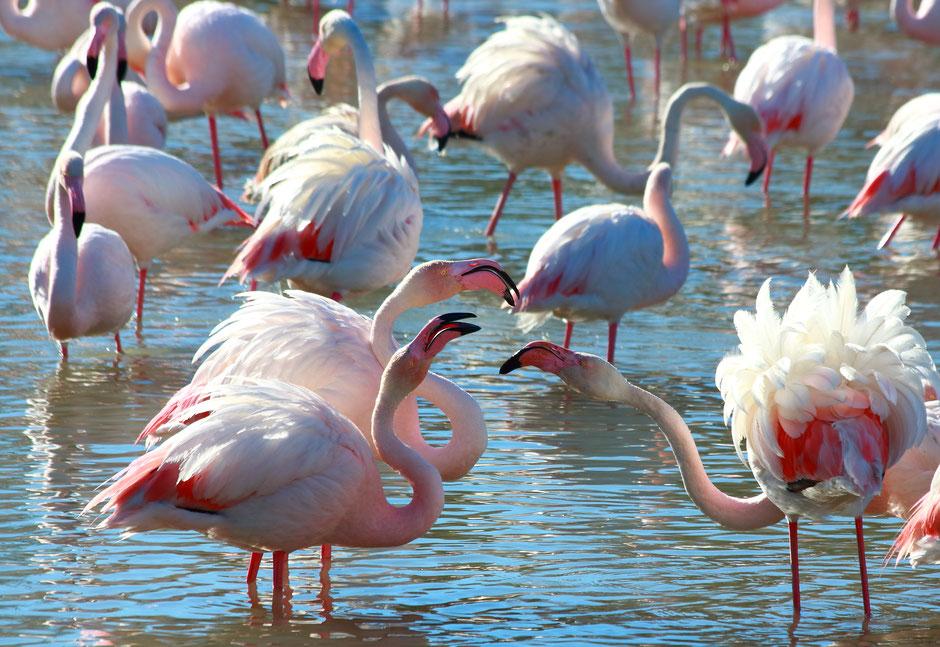 week end nature en Camargue. www.missaventure.com blog d'aventures, nature et photos. parc ornithologique du Pont de Gau