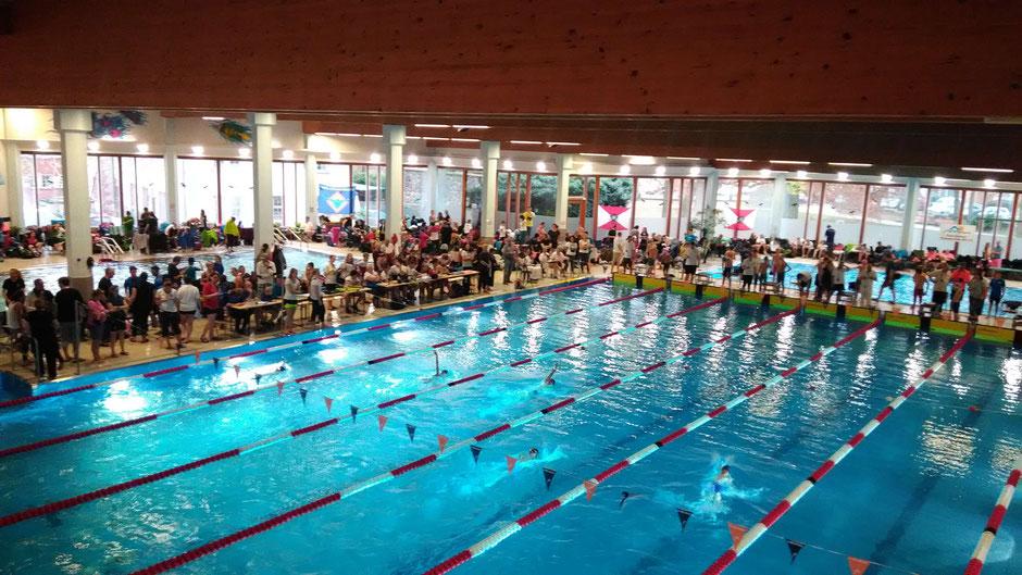 Bild: Schwimmgemeinschaft Frankfurt