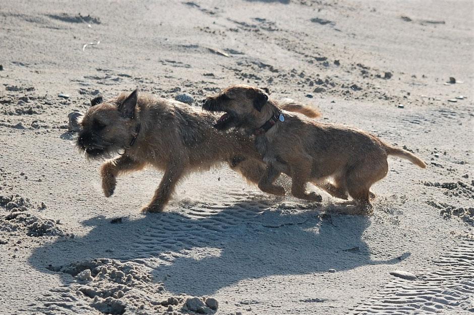 Eclipse mit ihrem Bruder Rocky (Ewok) am Strand