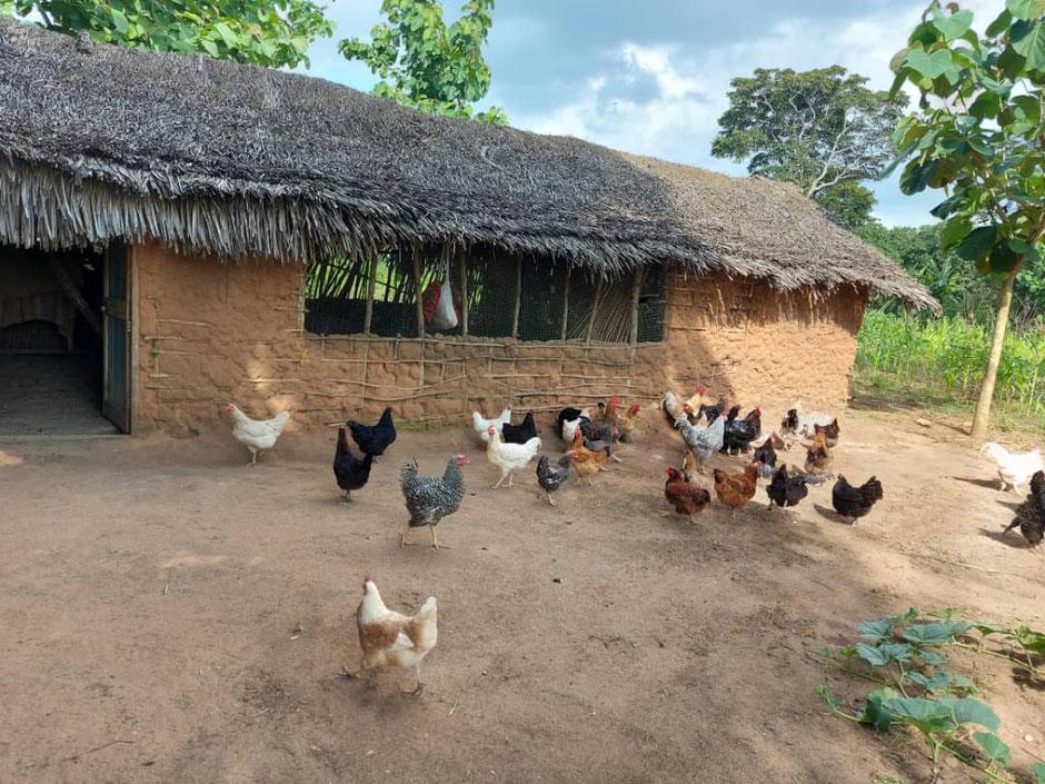 Hühnerzucht ist jetzt die Zukunft für unsere AIDS Frauen.
