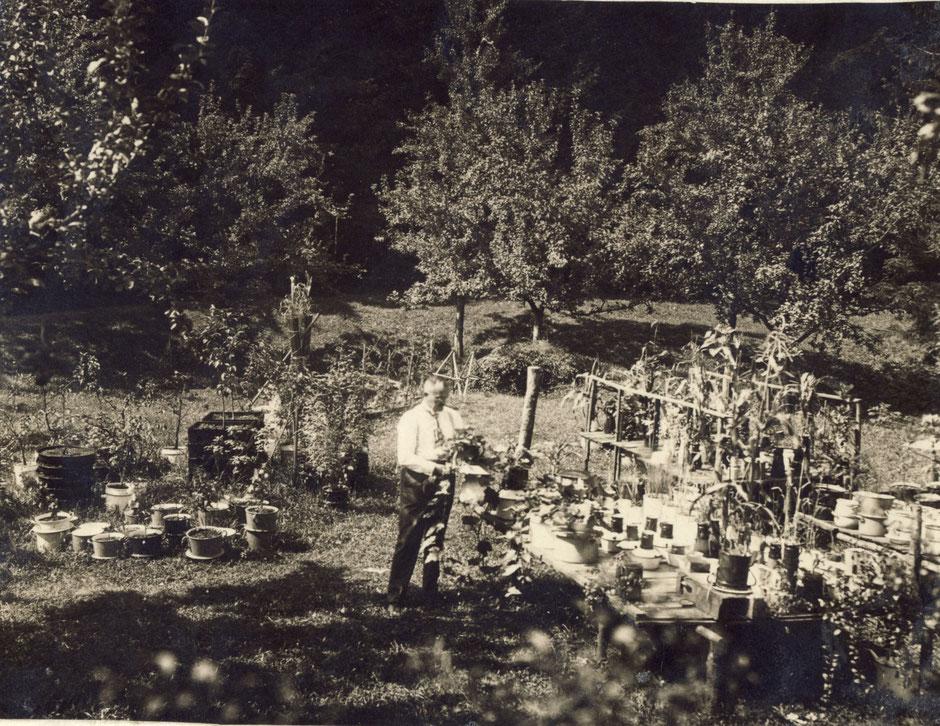 """1929 """"Vaters Versuche mit Wasserkulturen"""""""