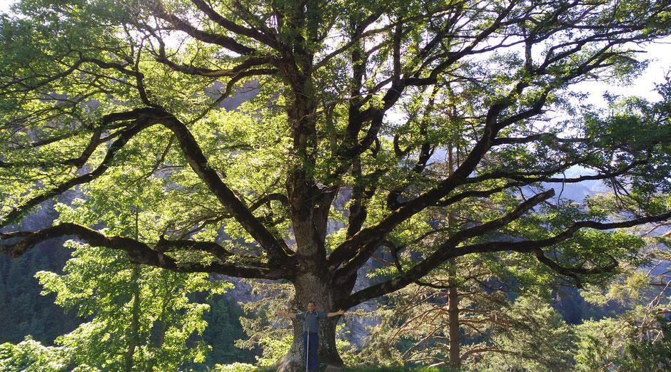 7 Laudato si- Aufgehoben in der Schöpfung als Grund zur Hoffnung