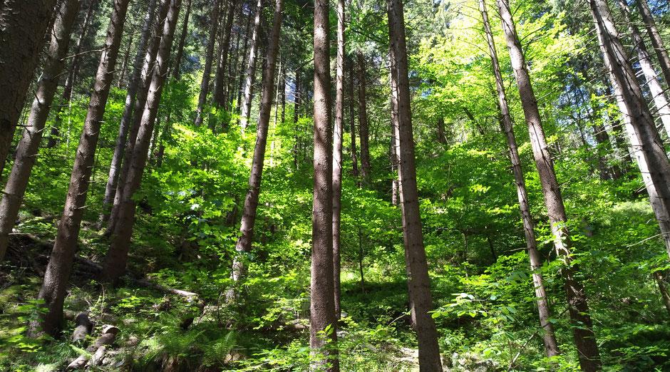 5 Stille und Klarheit Baumgruppe mit Sonnenstrahlen